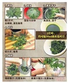 木瓜葉汁製作簡圖-1